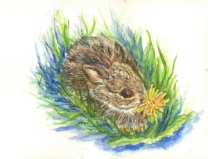 Baby Cottontail  WC pencil