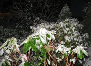 snow 12-17-2012